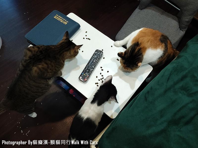 貓咪化毛潔牙餡餅