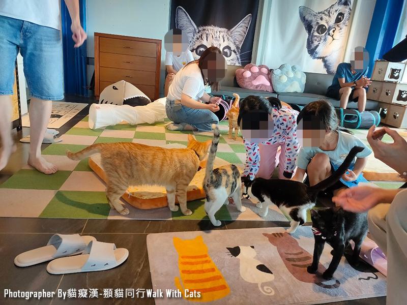 新竹峨眉貓餐廳