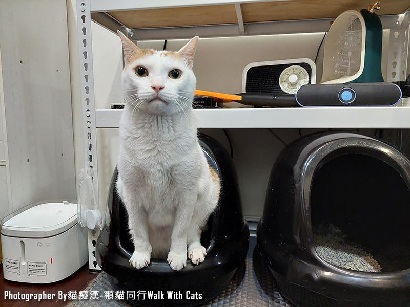 寵愛物語輕植系貓砂極細型